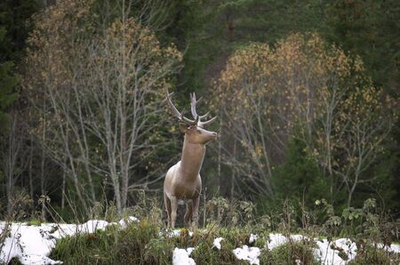 A statue of a stag in a late autumn forest. Near Losby, Norway   Stock Photo