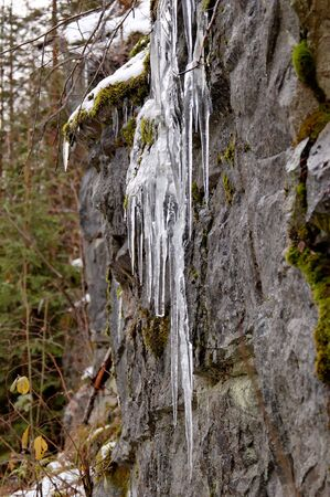 An icicle formation on a forest rock