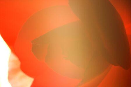 stark: Abstraktes Bild von stark Hintergrundbeleuchtung Rosenbl�ttern.