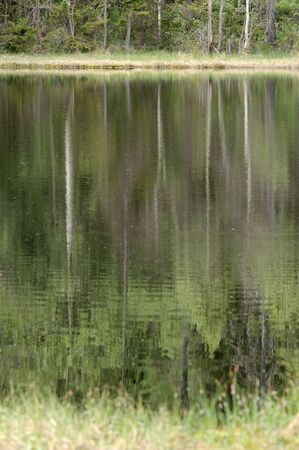 Trees reflecting in a forest lake Stock Photo - 3263664