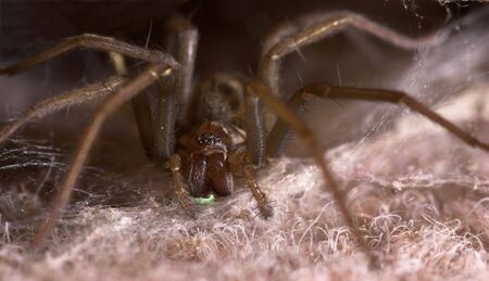 pincers: A spider with a venomously green glow under its pincers