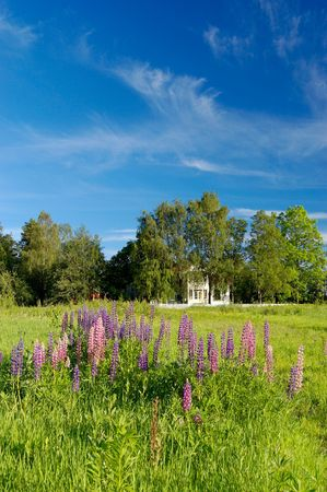 A landscape picture of a mansion house in a tree grove and lupins in the forground. With sky polarisation