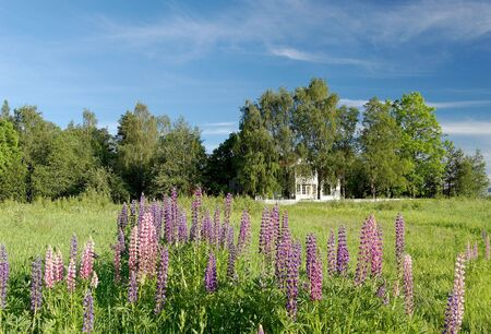 forground: A landscape picture of a mansion house in a tree grove and lupins in the forground. With sky polarisation