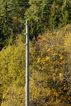 A pole with three electricity cables in the autumn wood.   Stock Photo
