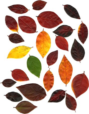 Assorted autumn leaves in various colours, ranging from green through red to yellow.