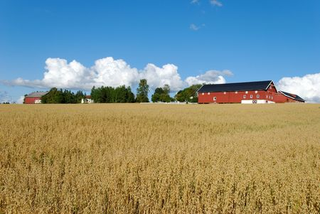 Horizontal image of an oats field with a farm and cloudscape.  Stock Photo