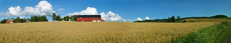 Panoramic view of a typical Norwegian farm with oats field and a nice cloudscape. Composed from 19 individual shots.