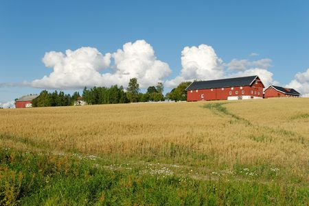 A Norwegian farm on a hill above an oats field with puffy clouds in the sky.