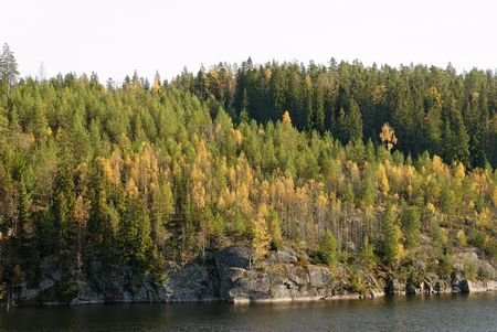 Forest in autumn colours by a mountain lake.