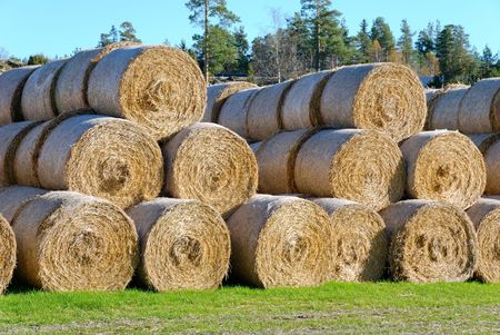 Multiple hay bails arranged in pyramids, seen somewhat from side.