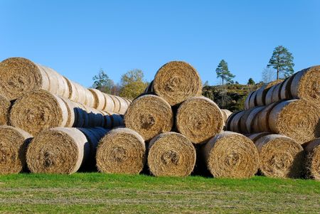 Multiple hay bails arranged in pyramids against clear blue sky.  Stock Photo