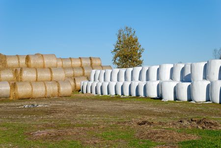 Rows of hay bails, packed in plastic and open.  Stock Photo