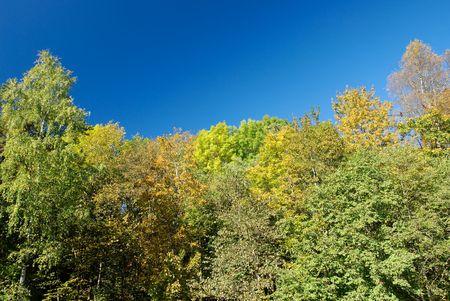 Multi-coloured autumn trees on deep blue polarised sky