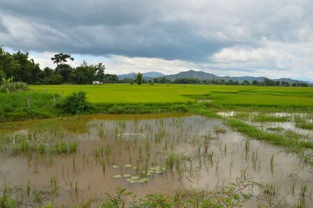 rice fields in Vietnam, against the background of mountains and cloudy skies, on the border with Cambodia Stockfoto