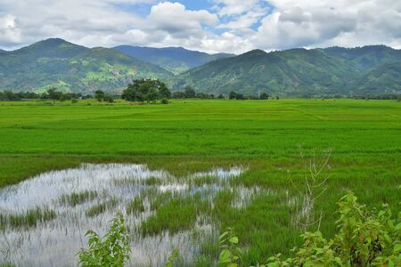 rice fields against the background of mountains and cloudy skies, on the border with Cambodia, Daklak Province, Vietnam Stockfoto