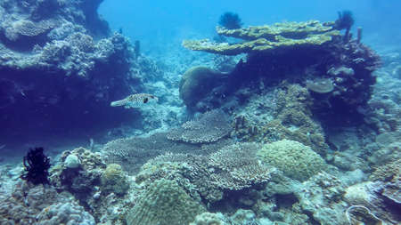the underwater world of the South China Sea, beautiful living corals, coral fish in depth, near the seabed
