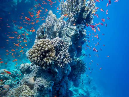 The underwater world of the sea Reklamní fotografie