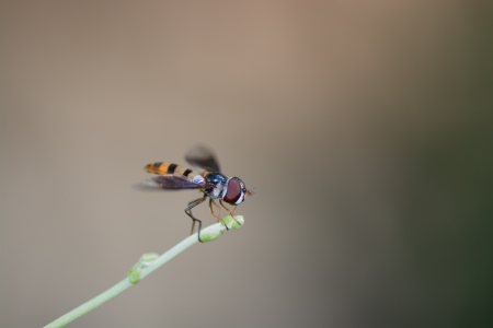 twining: A fly on a tip of a twining plant  Stock Photo