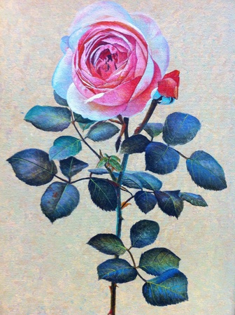 canvas: Pink rose drawing on canvas Stock Photo
