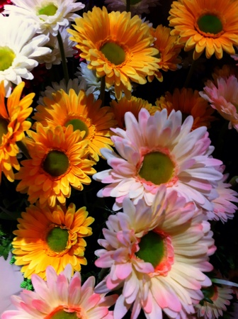 man made: Man made multicolor flowers