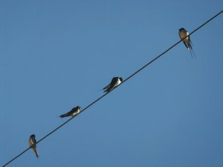 wire: Swallows on a wire. Stock Photo