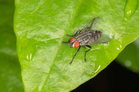 appendages: Flesh fly
