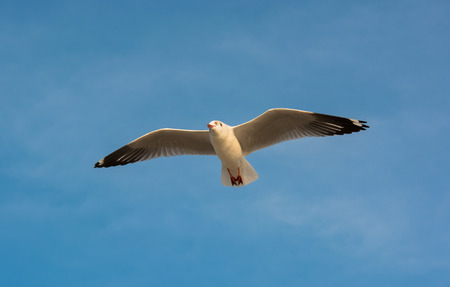bluesky: Seagulls gliding against bluesky  Stock Photo