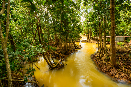 klong: Tha Pom Klong Song Nam Mangrove forest conservation and tourist destination in Krabi province, Thailand. Stock Photo