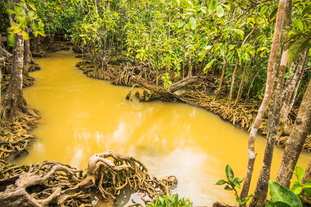 Tha Pom Klong Song Nam Mangrove forest conservation and tourist destination in Krabi province, Thailand. Stock Photo