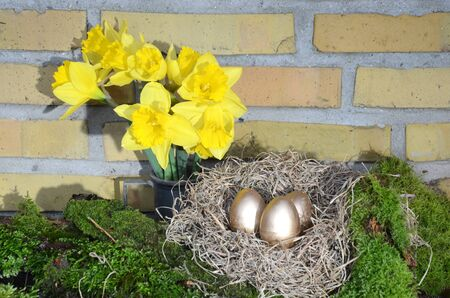 Arrangement with yellow Daffodil, moss and an nest with golden eggs.