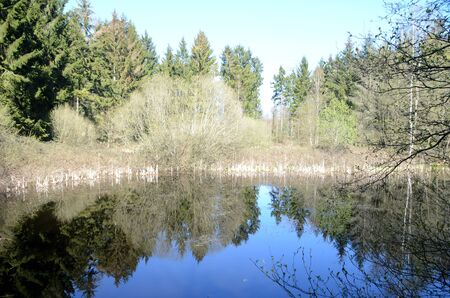 Calm forest pond surrounded with trees that mirror themselves on the pond's surface. Stockfoto