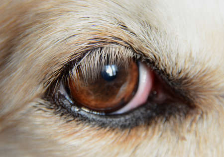 Closeup on a dog's eye.
