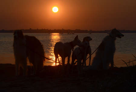 Sunset over the sea with the silhouettes of a number of dogs as foreground