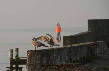 Harbor situation with seagulls on the wharf. Stockfoto