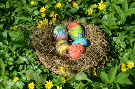Painted easter eggs in a nest hidden in grass with buttercup..