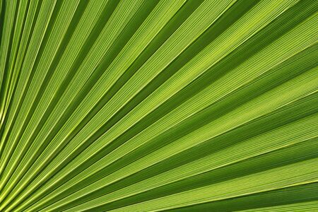 Palmetto Abstract Stock Photo