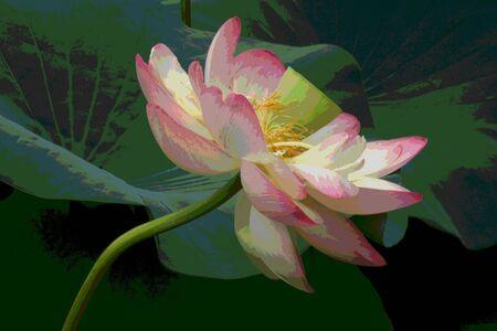 petal: Petals of Heaven Stock Photo