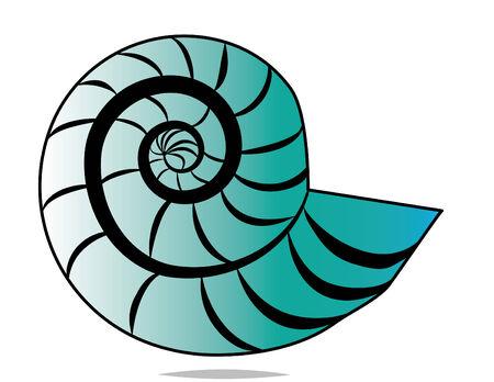 nautilus shell: Spiral Shell