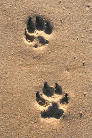 Paw Prints photo