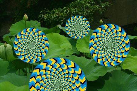 spin: Spin Wheelie Garden Stock Photo
