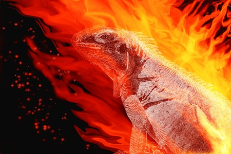 flaming: Fire LIzard