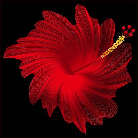 isolated flower: Hibiscus