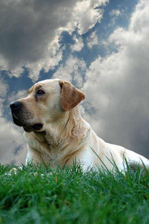 Dog and sky                              Stock Photo