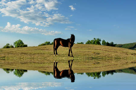 Horse water reflection