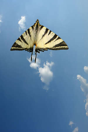 Butterfly and sky