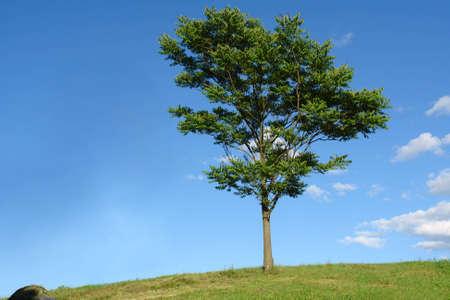 Single tree with a clear crisp blue sky