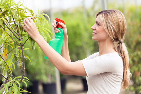 Shot of beautiful young woman watering the plants in the greenhouse Stock Photo