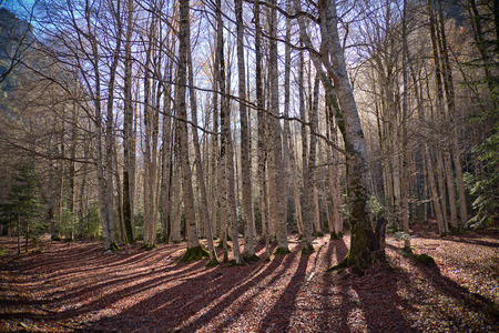 Autumn trees in Ordesa National Park, Pyrenees, Huesca, Aragon, Spain 写真素材