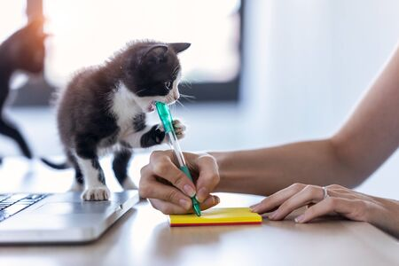 Shot of a pretty little cat biting the tip of a pen while its owner writes a note with him.