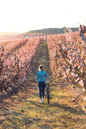 Shot of pretty young woman walking with a bike in cherry field in springtime. Back view. Banco de Imagens